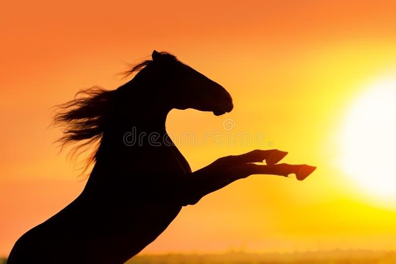 Hengst het grootbrengen omhoog bij zonsondergang royalty-vrije stock foto's