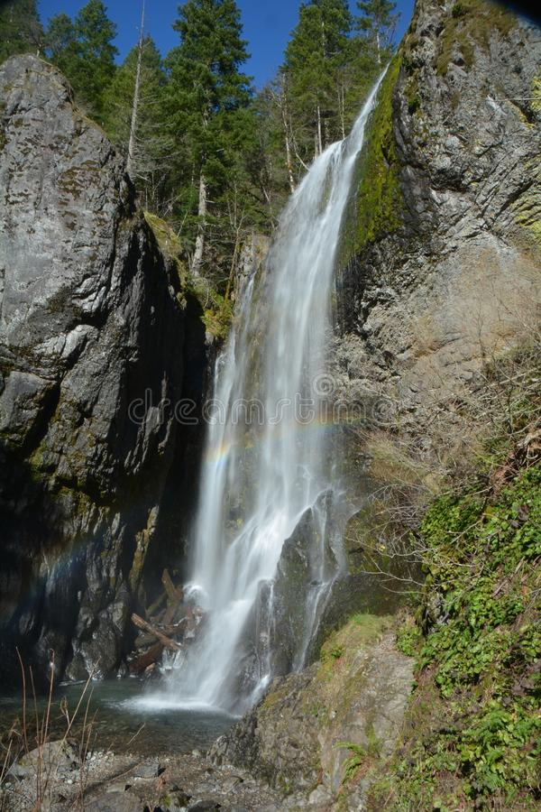 Henline cade nella foresta nazionale del Willamette dell'Oregon immagine stock libera da diritti