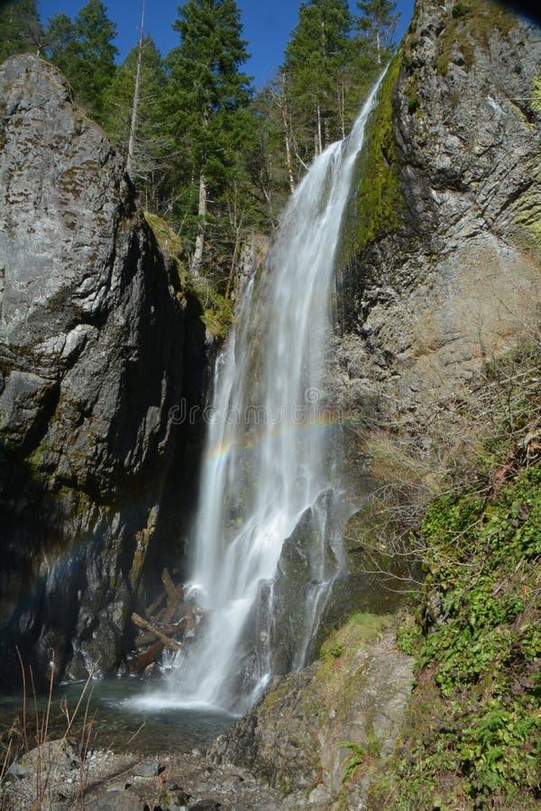Henline cai na floresta nacional do Willamette de Oregon imagem de stock royalty free