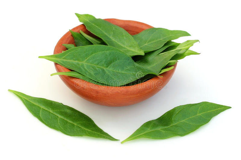 Henna φύλλα με ένα καφετί δοχείο στοκ φωτογραφία με δικαίωμα ελεύθερης χρήσης