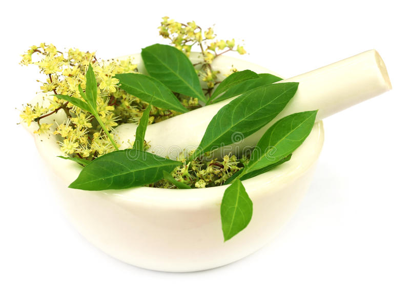 Henna φύλλα με το λουλούδι στοκ φωτογραφίες