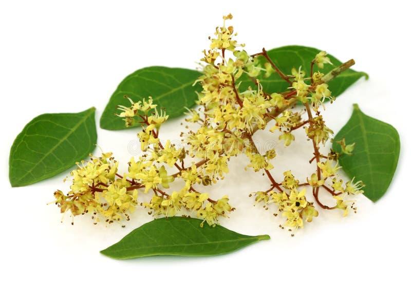 Henna φύλλα με το λουλούδι στοκ εικόνες με δικαίωμα ελεύθερης χρήσης
