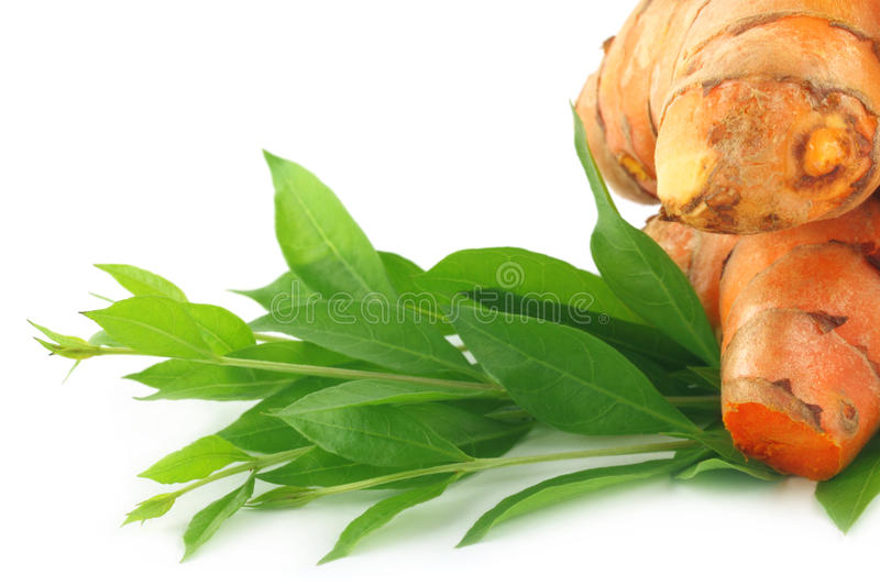 Henna leaves with raw turmeric royalty free stock images
