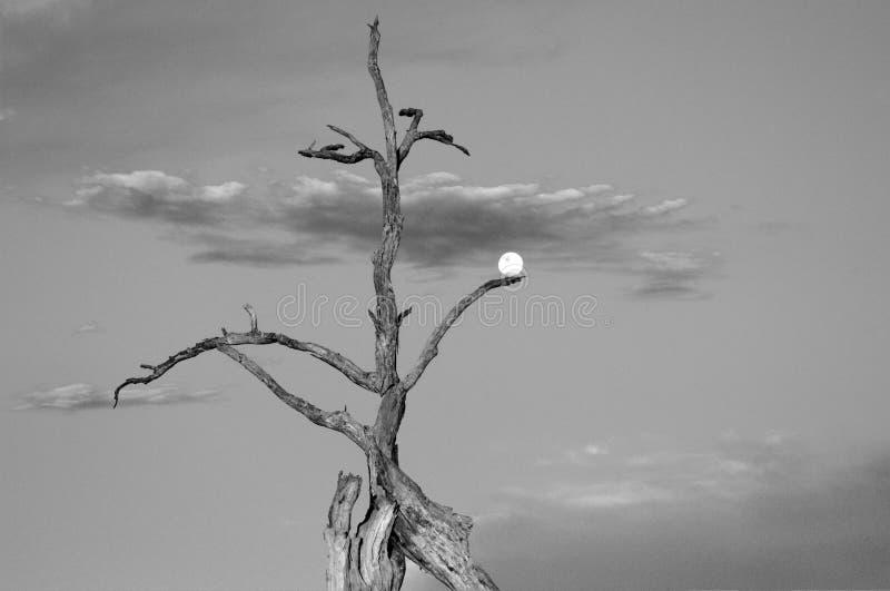 Henne som rymmer månen royaltyfri fotografi