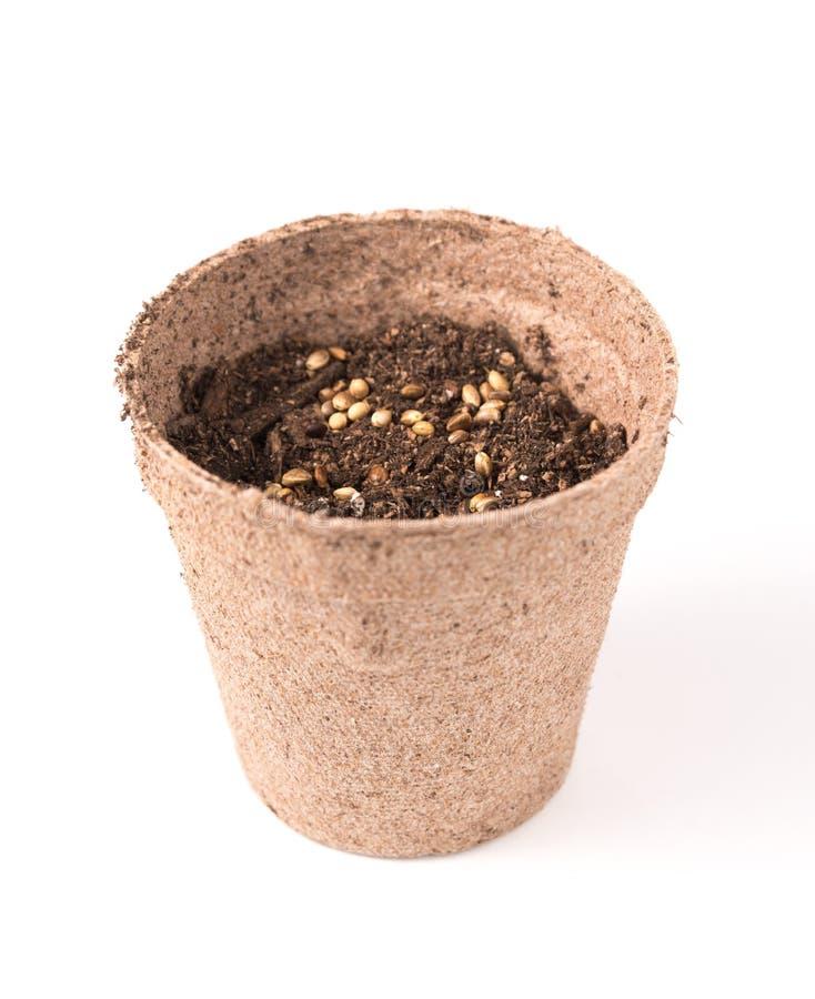Hennepzaden in een pot worden geplant die royalty-vrije stock afbeelding