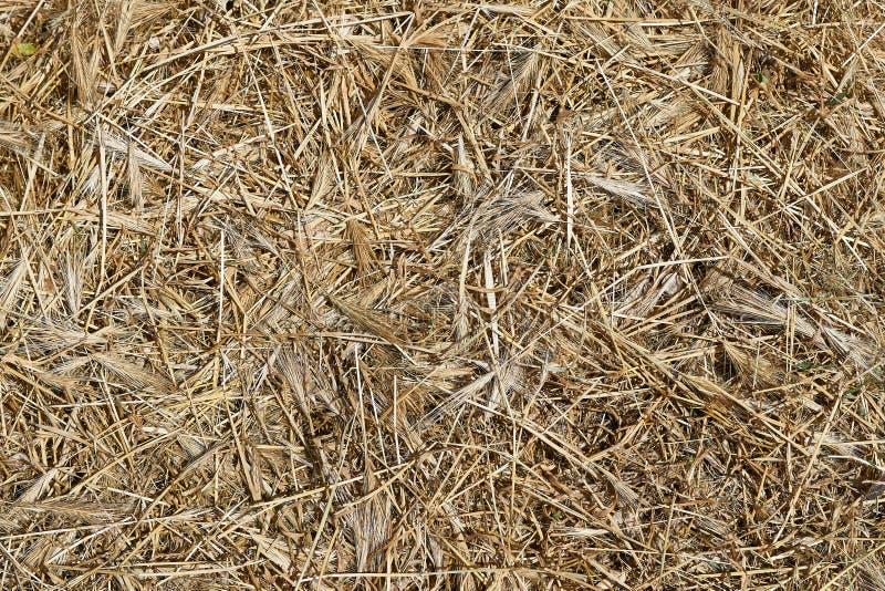 Heno amarillo seco de la hierba como textura del fondo fotografía de archivo
