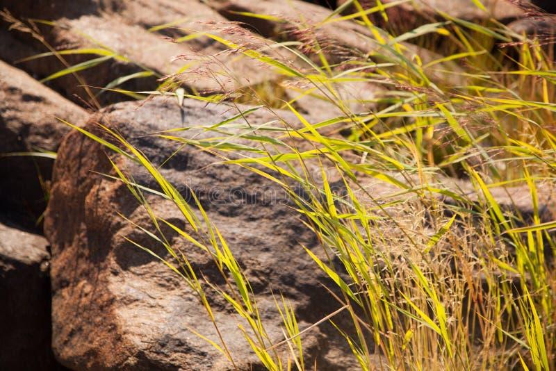 Heno e hierba al lado de la roca en el verano fotografía de archivo