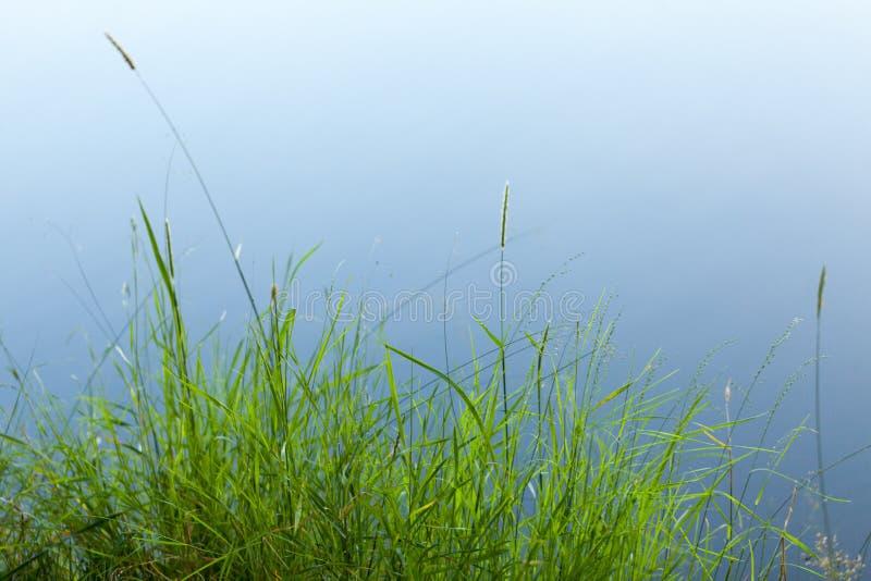 Heno e hierba al lado del lago en el verano foto de archivo libre de regalías