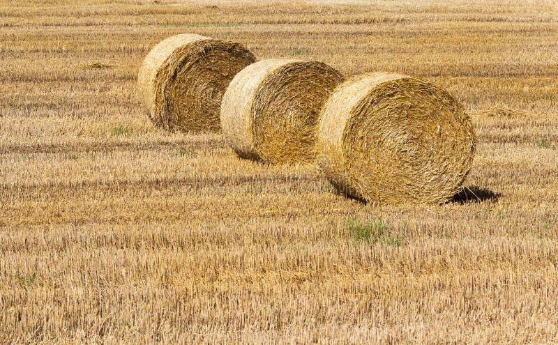 Heno y granja de la agricultura fotografía de archivo libre de regalías