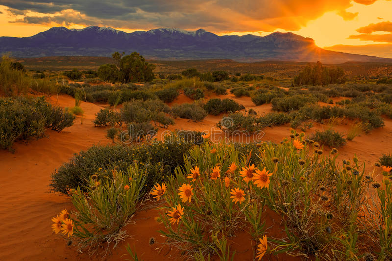 Henry Mountains wildflower sunset. Spring sunset in the Henry Mountains, Utah, USA stock image
