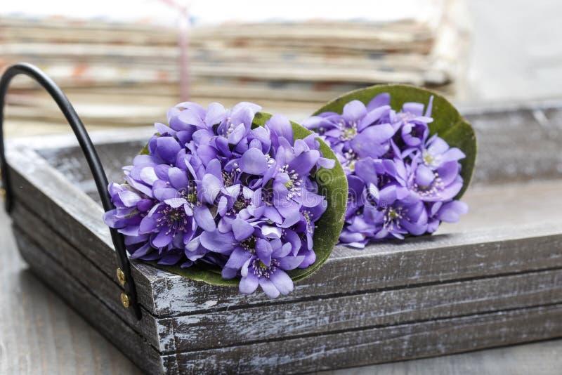 Hepatica kwiaty, dosyć mały bukiet fotografia stock