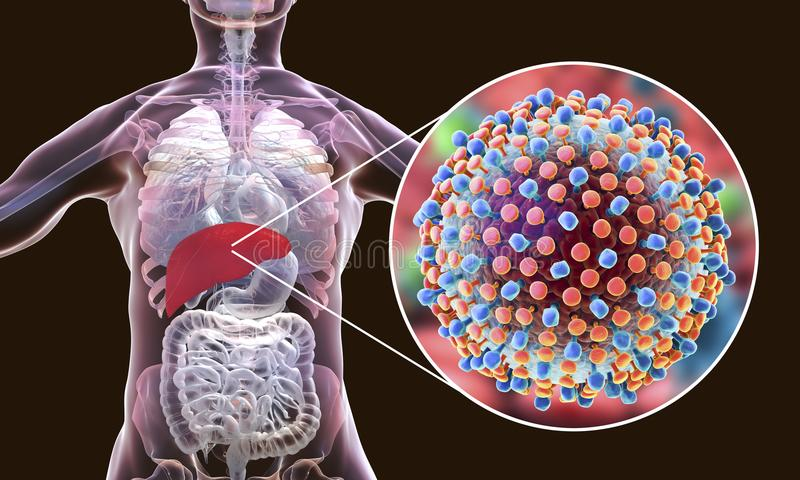 Hepatitis C virus infection medical concept. 3D illustration royalty free illustration