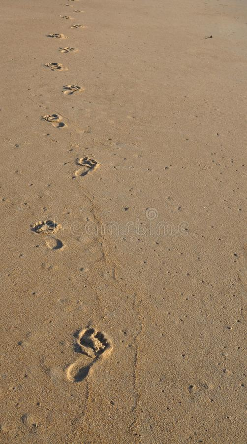 Her Footprints in the Sand stock photo. Image of alone - 103484834