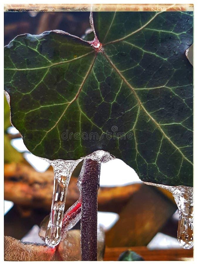 Hera congelada fotografia de stock royalty free