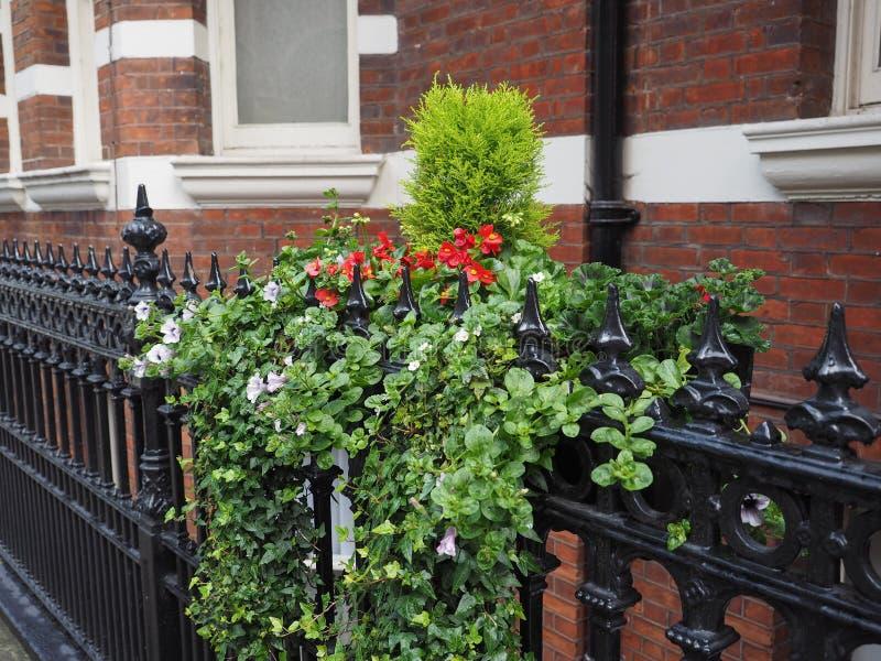 Hera e flores fotografia de stock royalty free