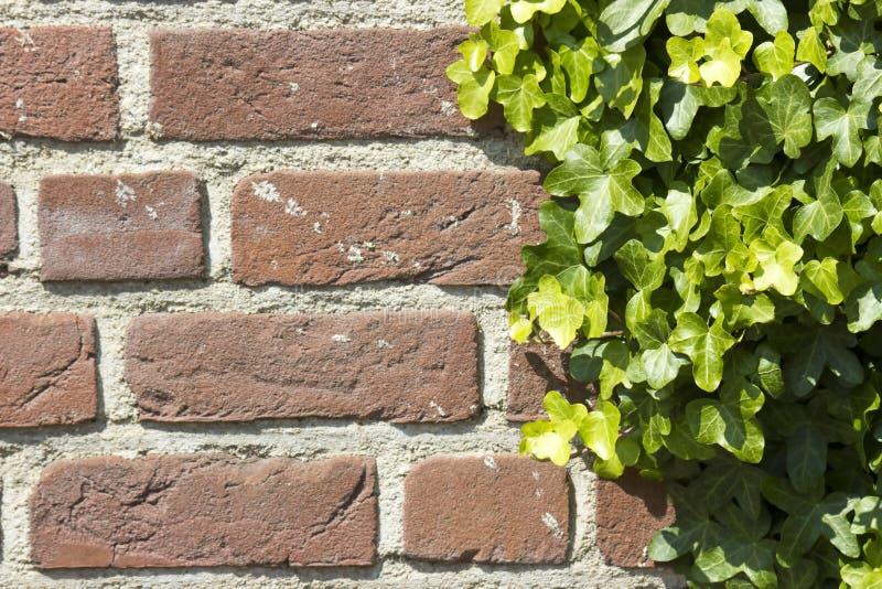 Hera na parede de tijolo imagem de stock royalty free
