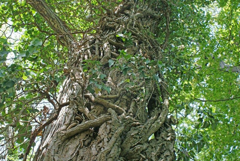 Hera no tronco de uma árvore fotografia de stock royalty free
