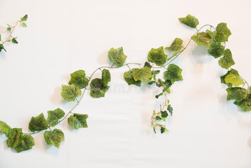 Hera verde branco Close-up imagem de stock royalty free
