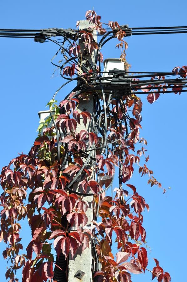 Hera vermelha do outono fotografia de stock