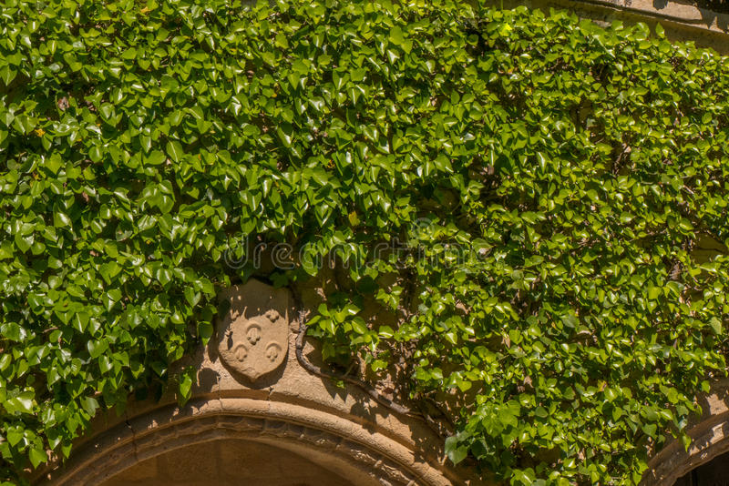 An heraldic shield in the green. An heraldic shield coming thru a climbing plant in a medieval house in Spain royalty free stock photos