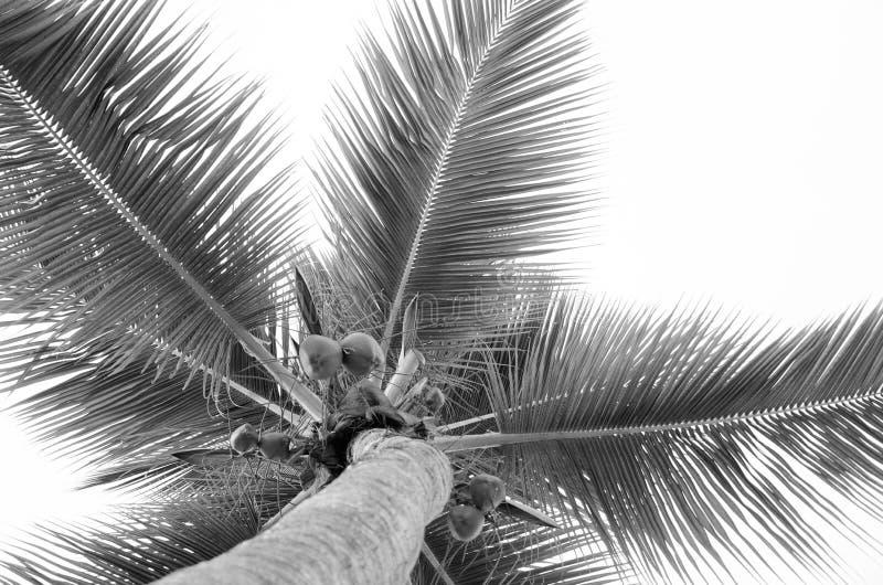 Herauf die Palme stockfotografie