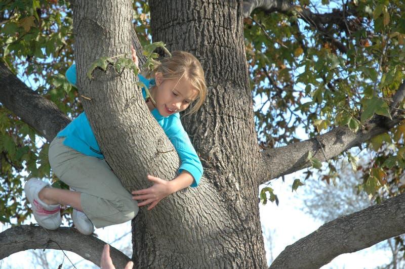 Herauf einen Baum lizenzfreie stockbilder