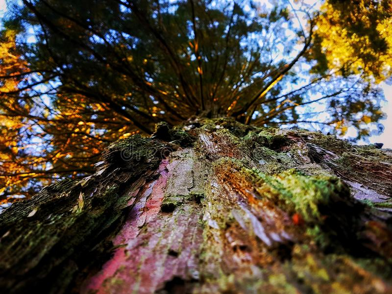 Herauf einen Baum stockfotos