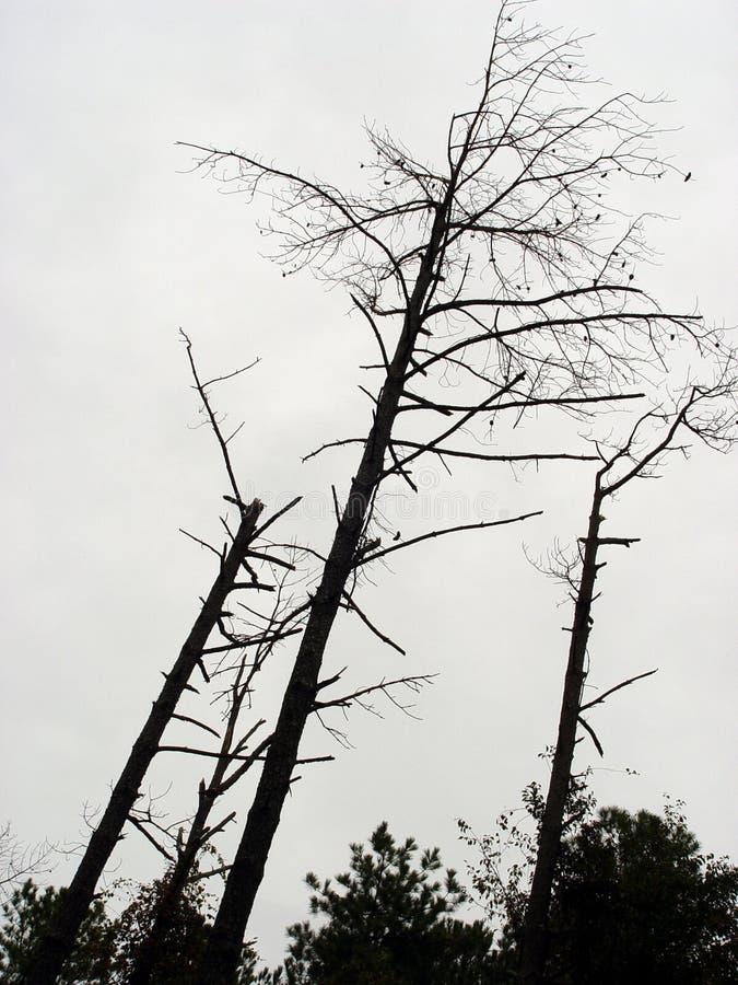 Download Heraus betont stockfoto. Bild von düster, creepy, bäume - 30080