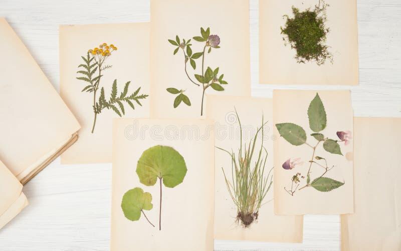 Herbário das flores e das gramas fotografia de stock royalty free