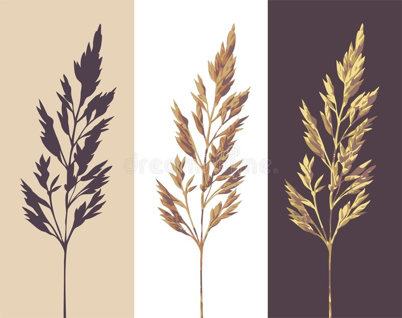 Herb. Silhouette and two colour versions of a herb royalty free illustration