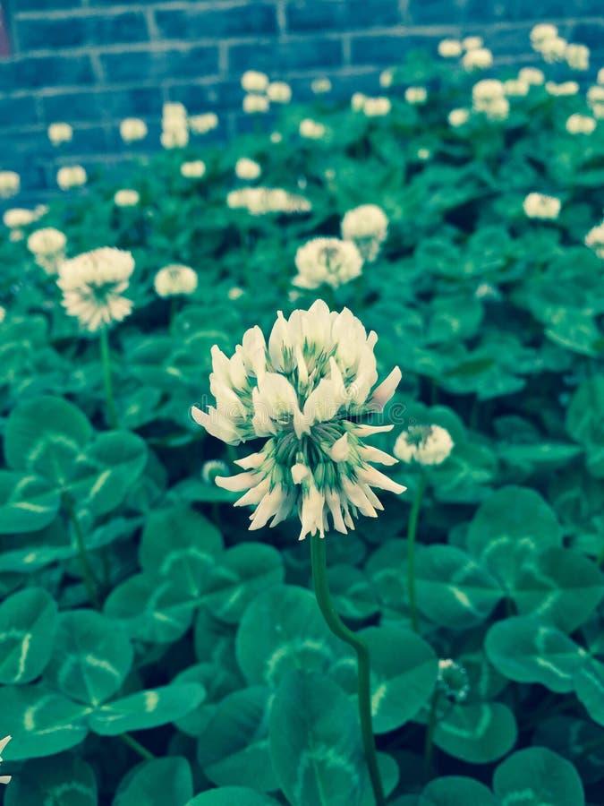 herb fotos de stock royalty free