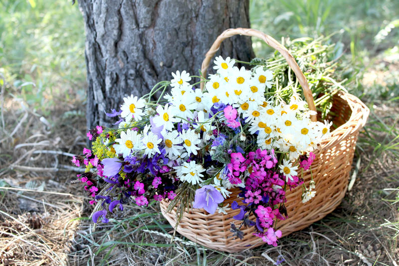 Download Herb basket stock photo. Image of ingredient, daisy, green - 25332178