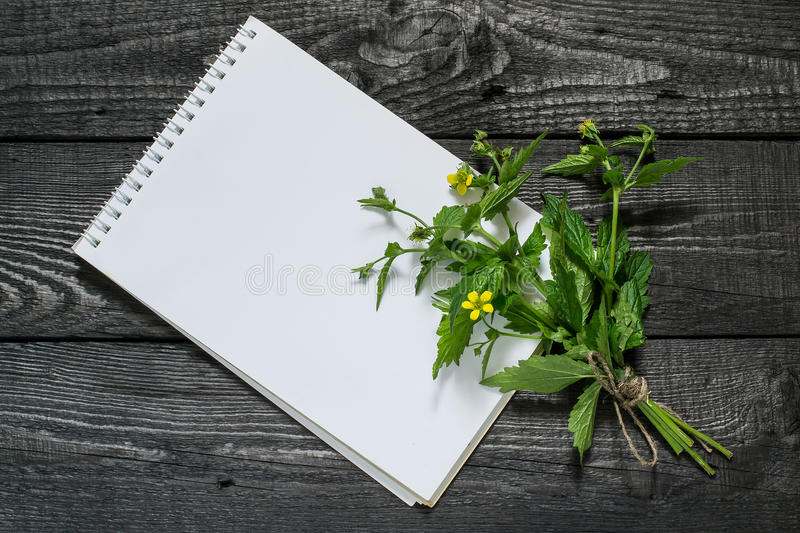 Herb Bennett Geum urbanum and notebook. Medicinal plant Geum urbanum also known as wood avens, herb Bennet, colewort and St. Benedict`s herb and notebook to royalty free stock image