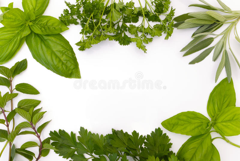 Herb border on white background royalty free stock photos