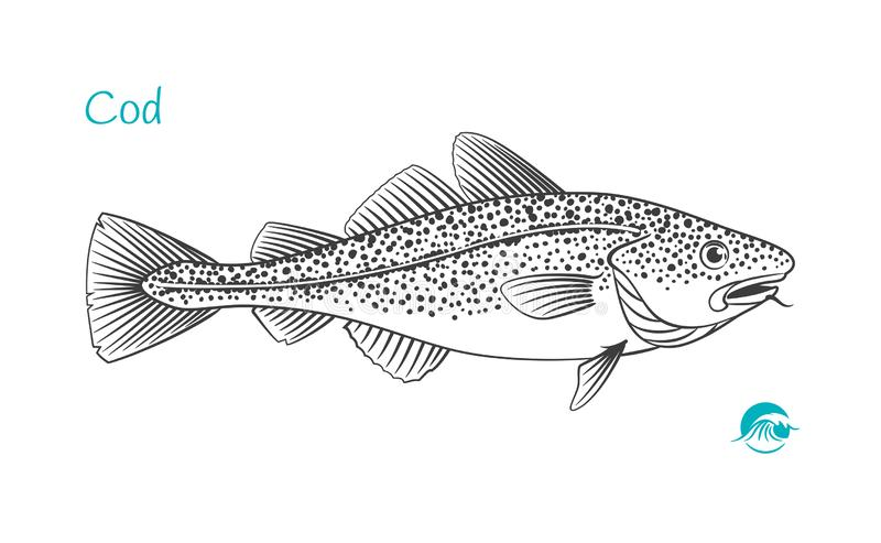 Cod fish hand-drawn illustration stock illustration