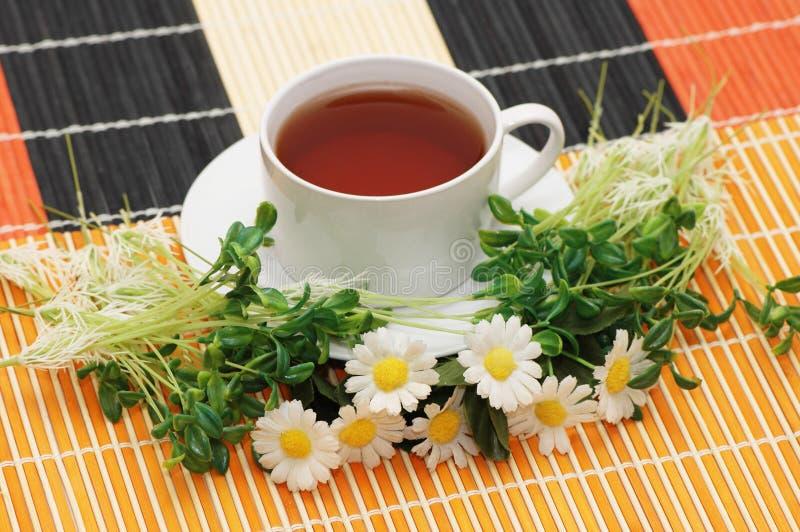 herb filiżanki herbaty zdjęcie royalty free