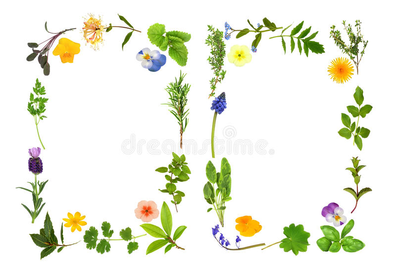 Herb and Flower Leaf Borders vector illustration