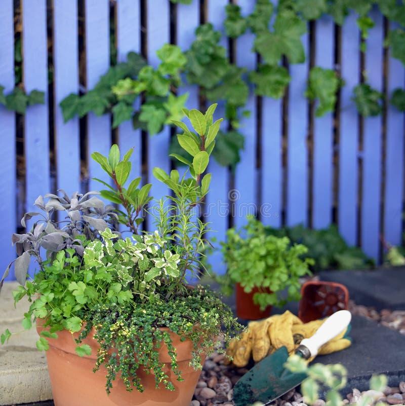 Download Herb Garden stock image. Image of nursery, gardening, foliage - 176199