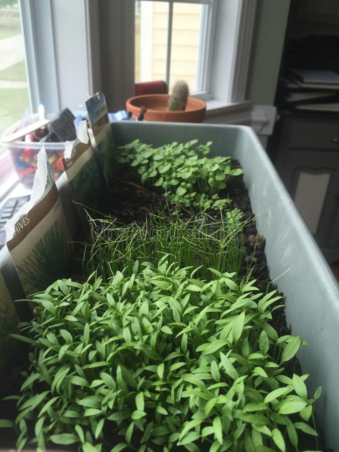 Herb Garden foto de stock