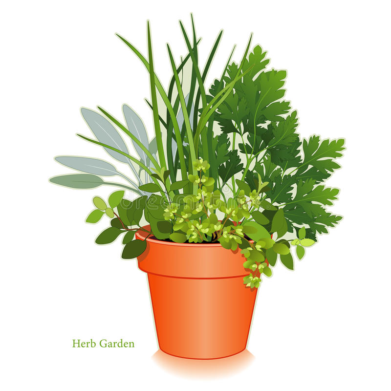 Herb Garden in Clay Flowerpot. Clay flowerpot garden planter with aromatic cooking herbs, left to right: Italian Oregano, Sage, Chives, Flat Leaf Parsley, Sweet vector illustration