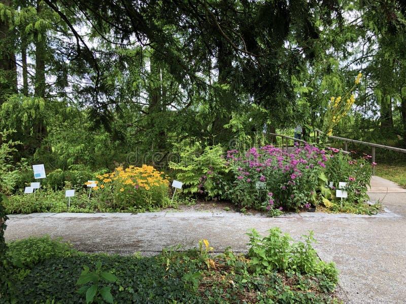 Herb Garden eller Krautergarten Kraeutergarten, blommaö Mainau på sjön Constance eller matris Blumeninsel im Bodensee royaltyfria foton
