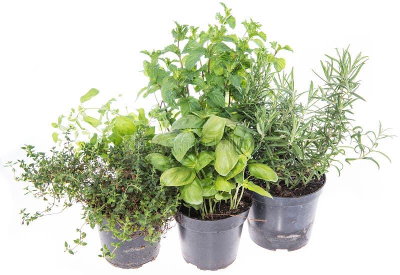 Herb Garden a isolé sur le blanc image libre de droits