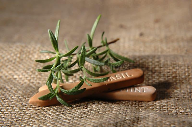 Download Herb Gardening Royalty Free Stock Images - Image: 503599