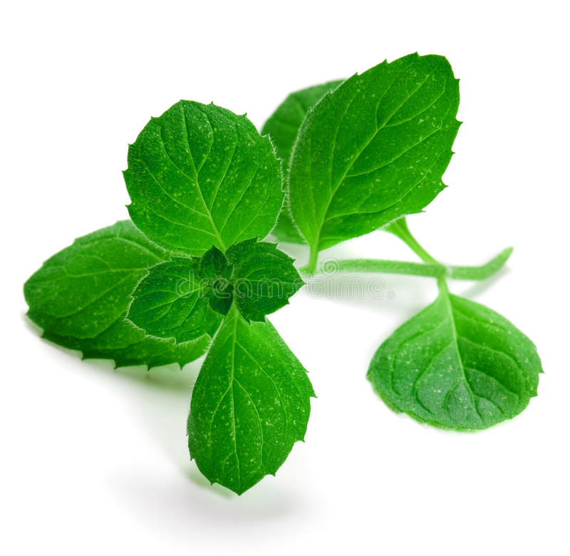 Herb green mint royalty free stock photos