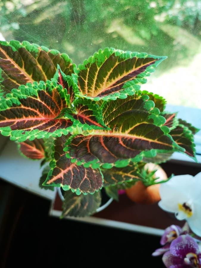 Herb royalty free stock photo