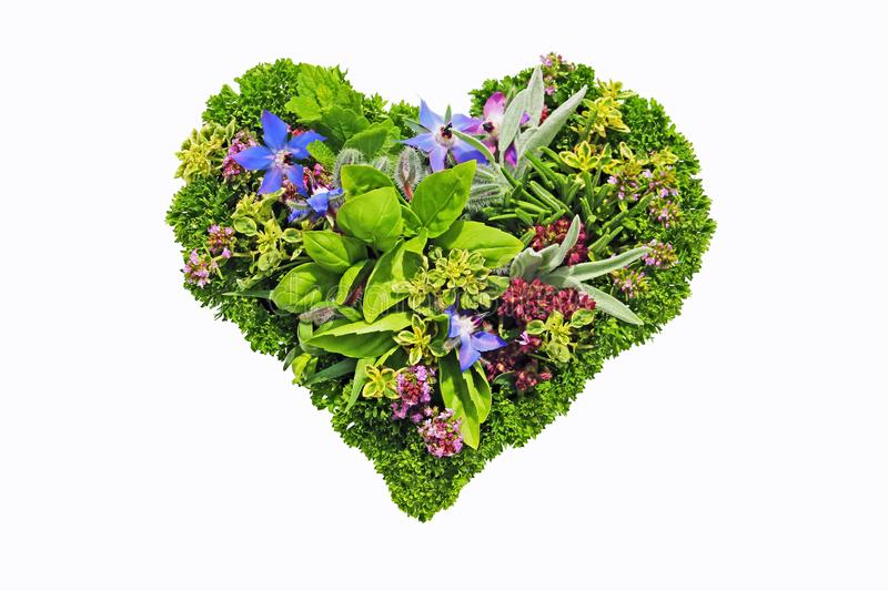 Herb heart stock photo