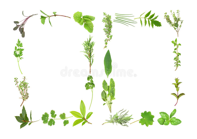 Herb Leaf Abstract royalty free illustration