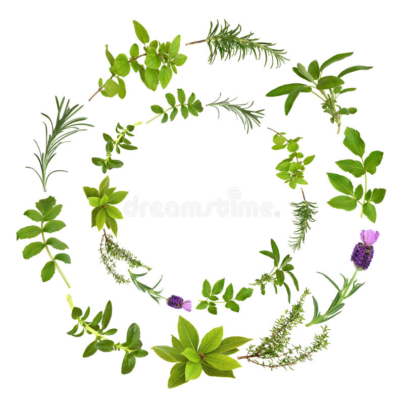 Herb Leaf Abstract Design. Medicinal and culinary herbs in a circular design, over white background royalty free stock image