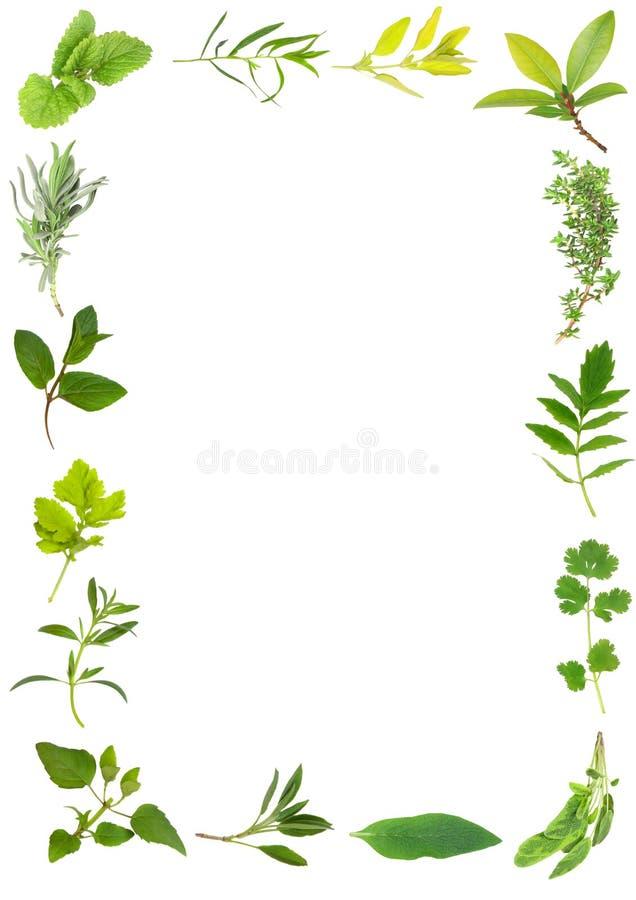 Herb Leaf Beauty. Herb leaf selection forming a frame over white background. Bergamot, hyssop, golden feverfew, chocolate mint, lavender, lemon balm, comfrey vector illustration