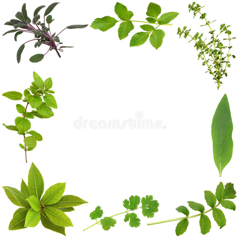 Herb Leaf Border. Herb leaf selection forming an abstract frame, over white background stock photo
